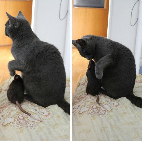 猫とネズミでも親友になれる01