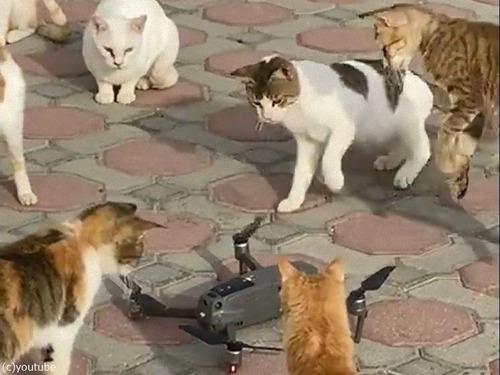 ドローンのプロペラと猫02