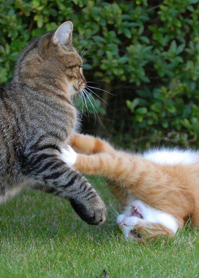 壮絶なる2匹の猫13