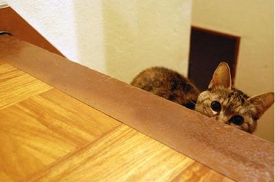 潜む猫14
