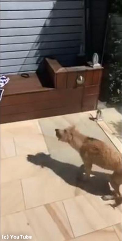 プール上がりの犬、なんてお利口さん…!01