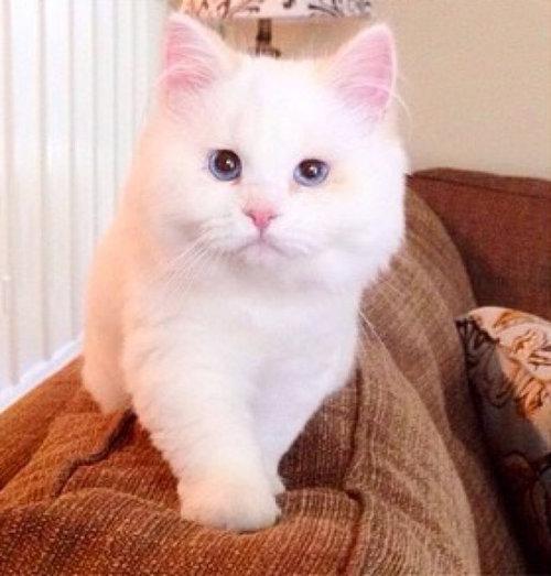 保護した子猫が、すばらしい毛並だった03