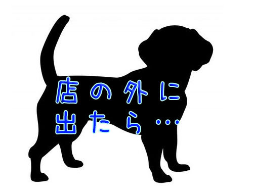 犬に盗難防止タグ00