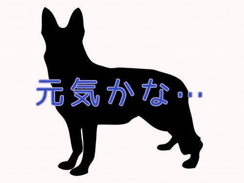 犬の新しい飼い主が写真を送ってきた00