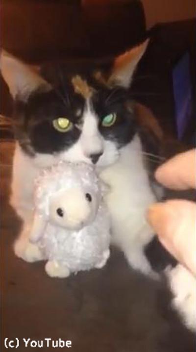 「あげません!」鋭い目つきでぬいぐるみを守る猫様01