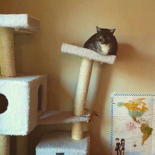 猫が太りすぎたと思うとき01