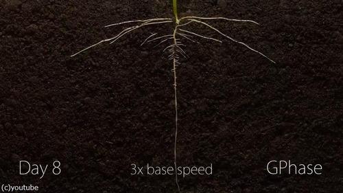 植物タイムラプス06