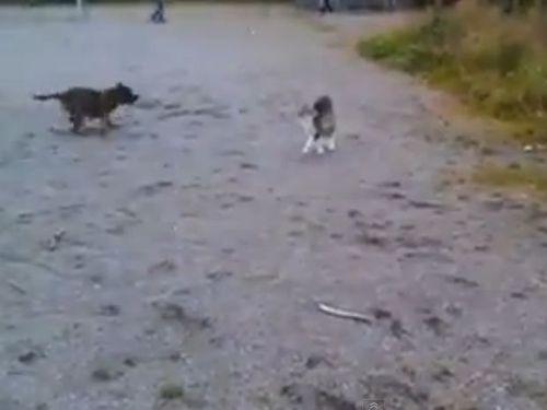 犬と猫、静と動の対決01