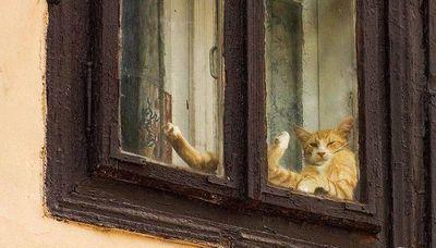 窓ガラス越しの猫パンチ対決