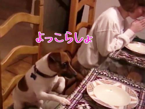 家族の「お祈り」を見て愛犬は…00