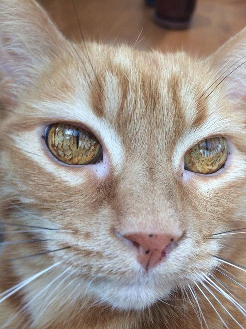 この猫の目がすごい01