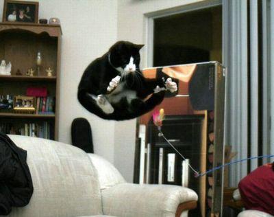 猫ジャンプ17