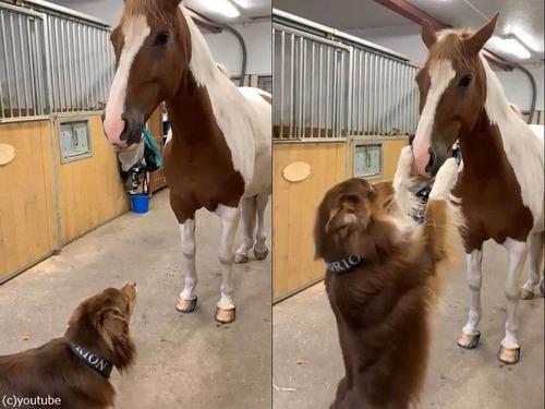 犬と馬のハグ00