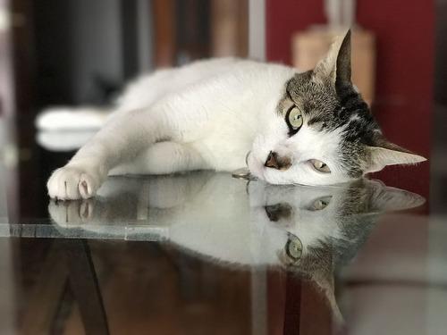 ガラスの上の猫00