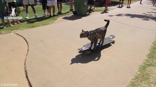 スケーター猫がギネス記録達成03