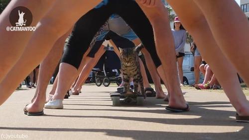 スケーター猫がギネス記録達成04