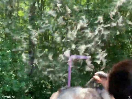 ハスキー犬の毛替わりのアイデア02