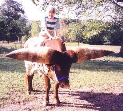 世界一のツノを持つ牛03