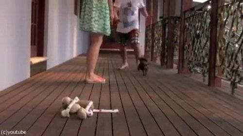 レディを守る小さな子犬04