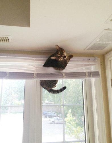 チャレンジャーな猫17