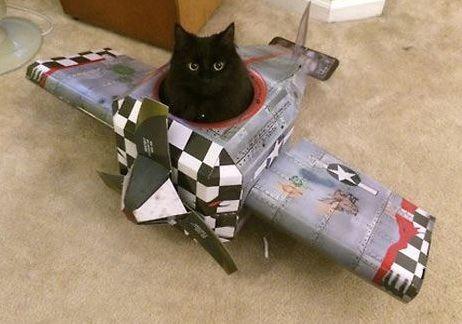 猫と乗り物07