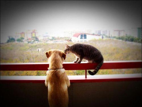 愛情いっぱいの動物19