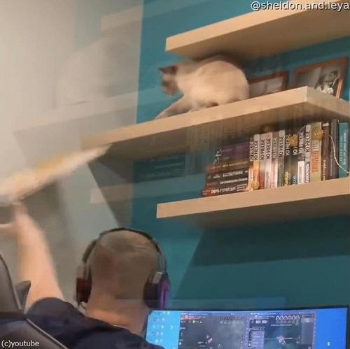 頭上の棚から物を落とす猫01