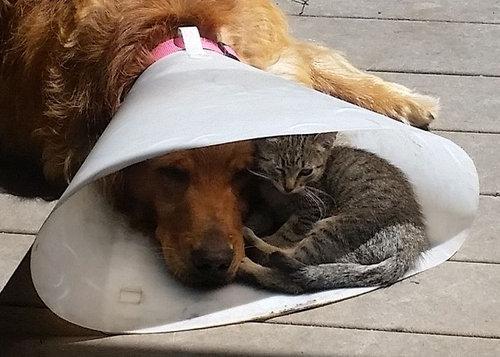 エリザベスカラーの犬と猫02