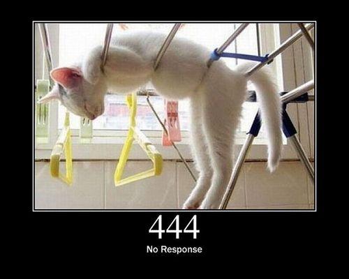 猫でHTTPステータスコード22
