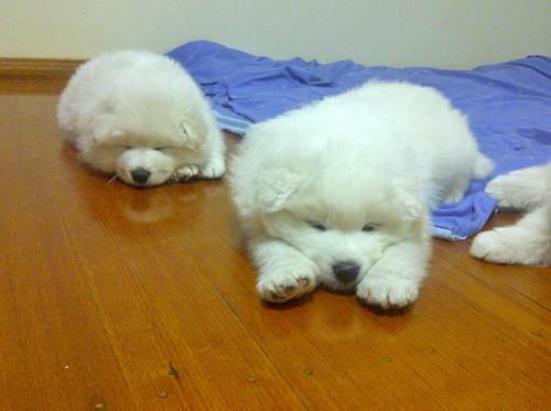 家族で就寝する犬05