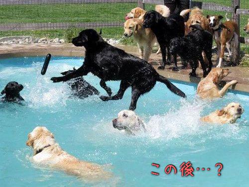 プールで遊び倒した後の犬00