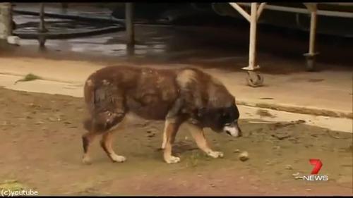 最高齢の犬マギーが亡くなる04