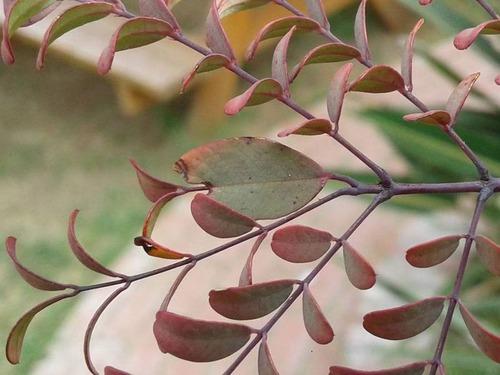 枝の代わりに間違って葉っぱを伸ばした木02
