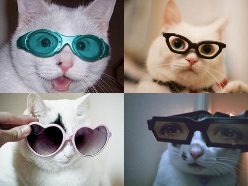 メガネ猫00