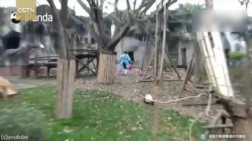 おもちゃを片付けられたパンダはこうなる03