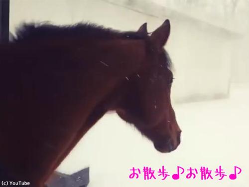 後悔する馬00