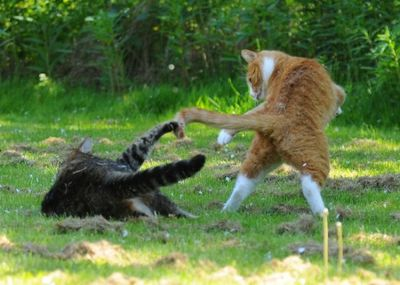 壮絶なる2匹の猫02
