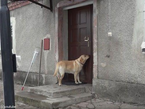 家に入りたい犬01
