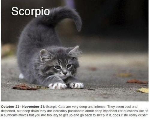 猫で12星座占い08