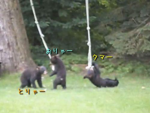 庭で遊ぶコグマたち