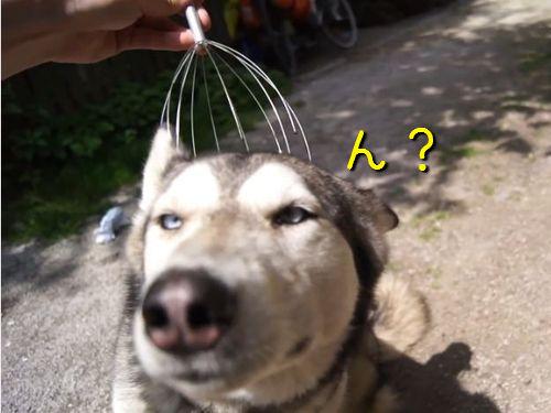 ヘッドマッサージが好きな犬00