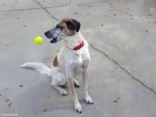 「うちの犬とボール」03