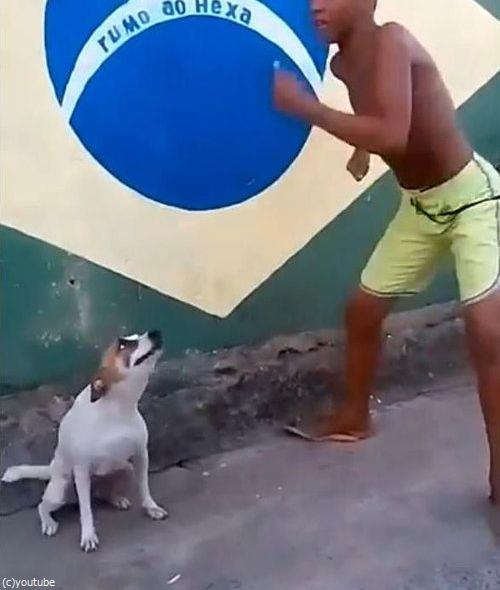 ブラジルは犬だってカーニバル03