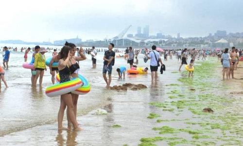 中国の緑の海03