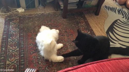 猫型ロボットと初体面した猫たち06