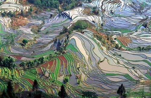 絵画みたいな中国の田んぼ03