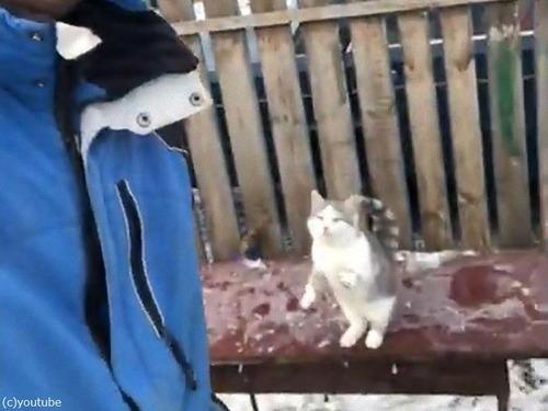 飼い主さんの肩に跳び乗ろうとした猫00