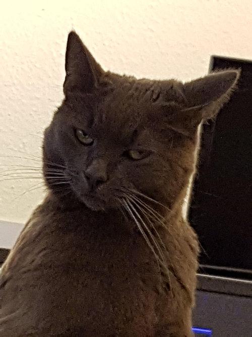 写真写りの良い猫10