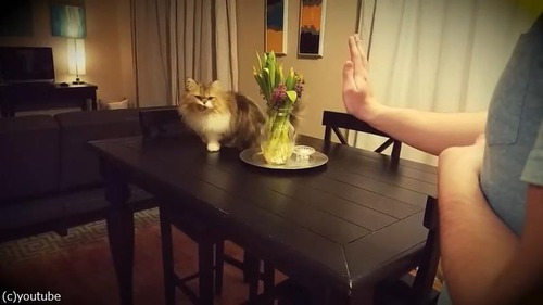 ハイタッチしてくれる猫様01