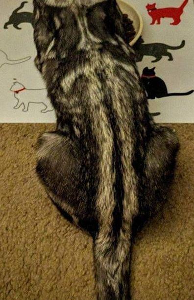 背中に剣を持つ猫02